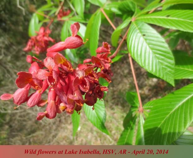 FlowersatLakeIsabella copy